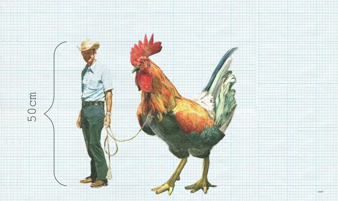 Уменьшение роста человека. Человек размером с курицу.