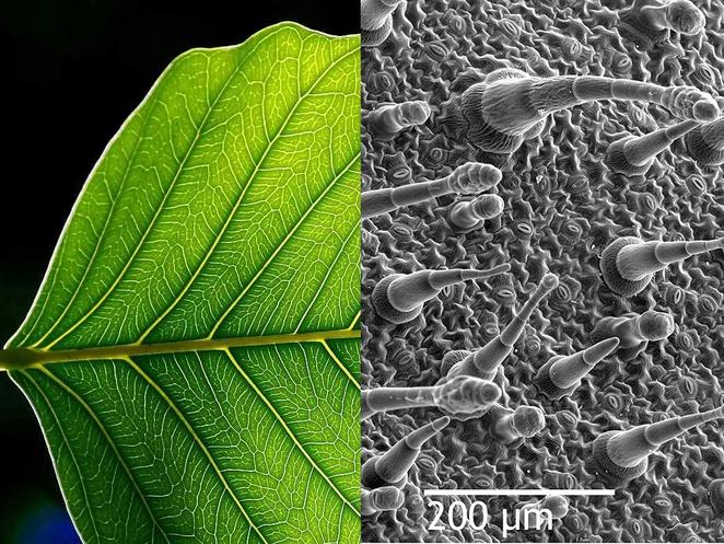 Листья, улавливающие загрязняющие вещества