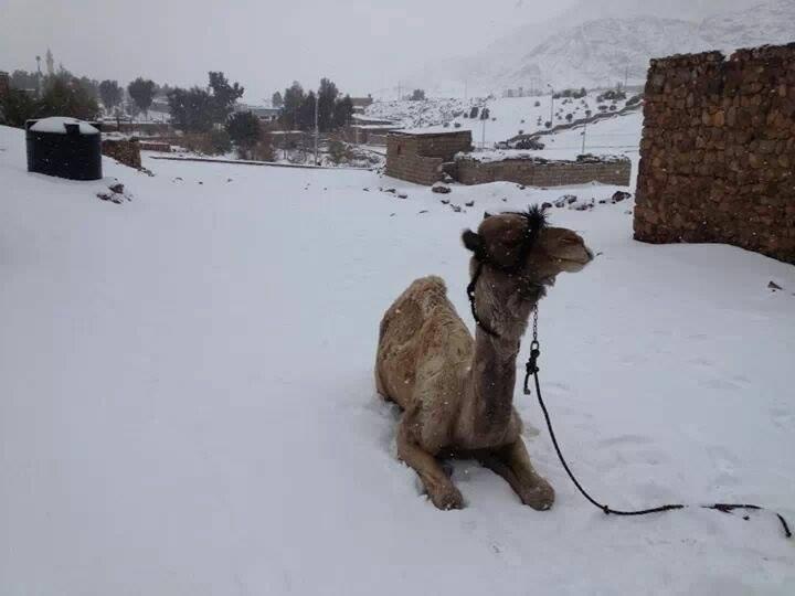 Египет под снегом