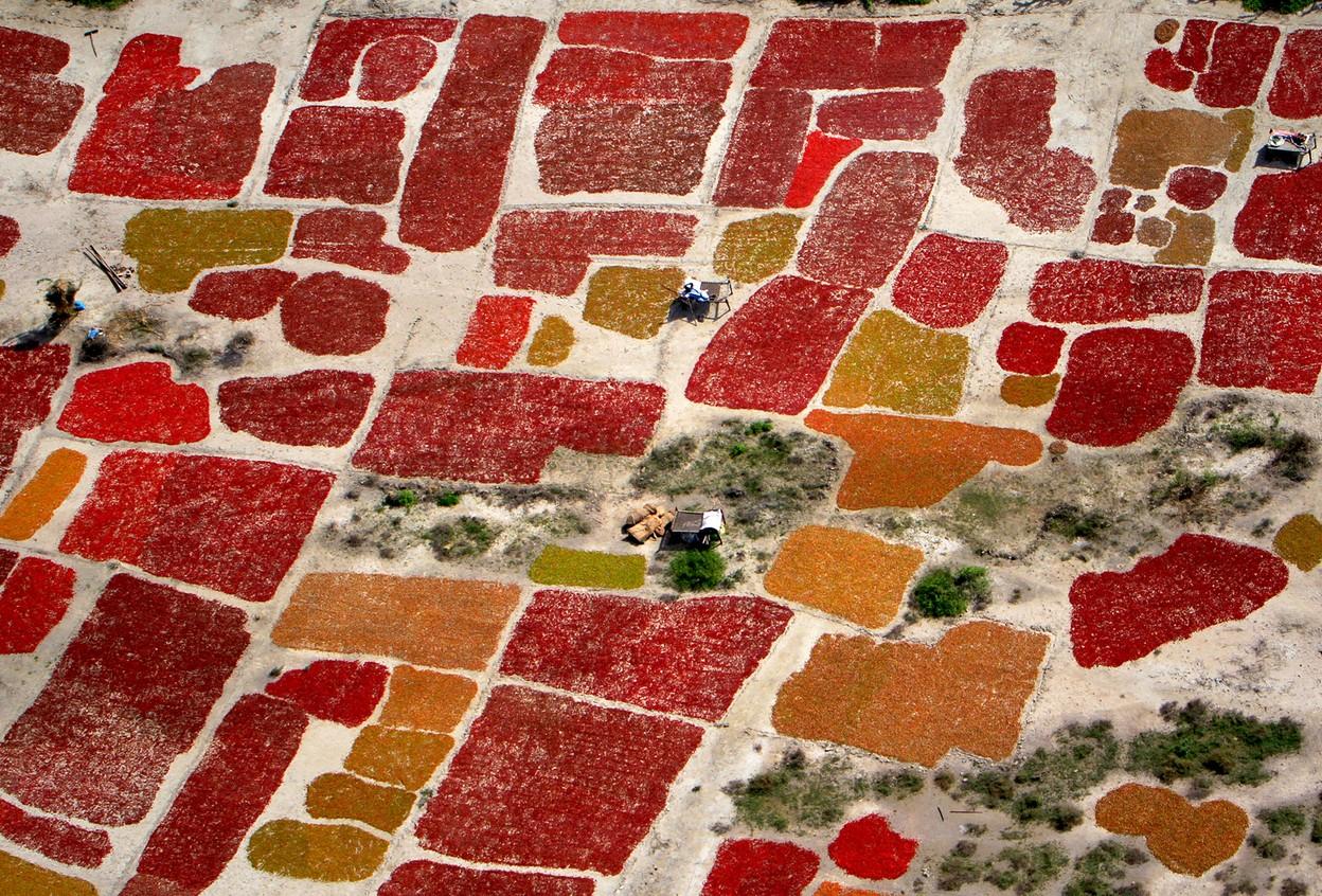 Сбор красного перца
