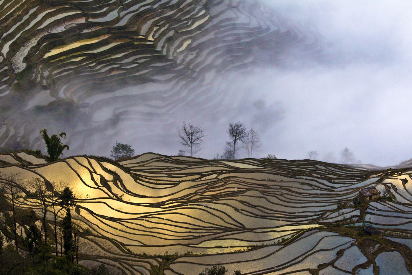 Снова рисовые поля
