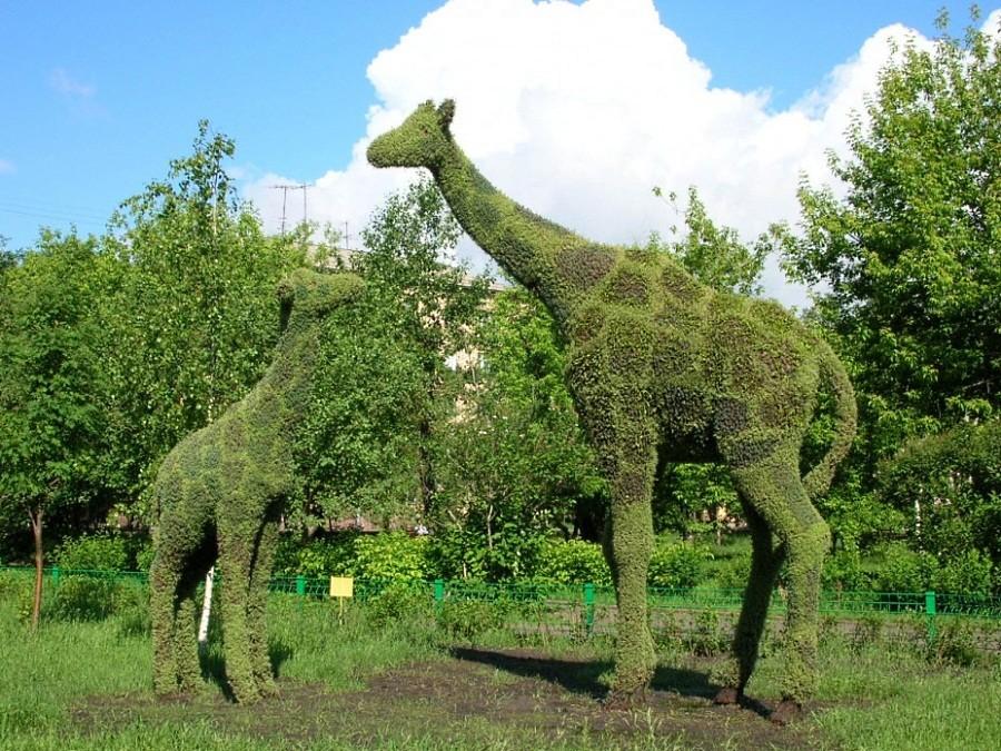Зелёные жирафы