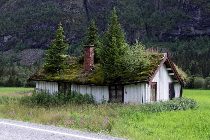 Зелёные крыши в Норвегии