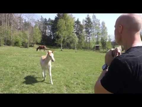 разговор на языке лошади