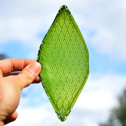 Впервые получен искусственный лист, способный фотосинтезировать
