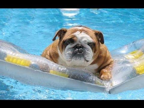 Собаки, которые любят воду