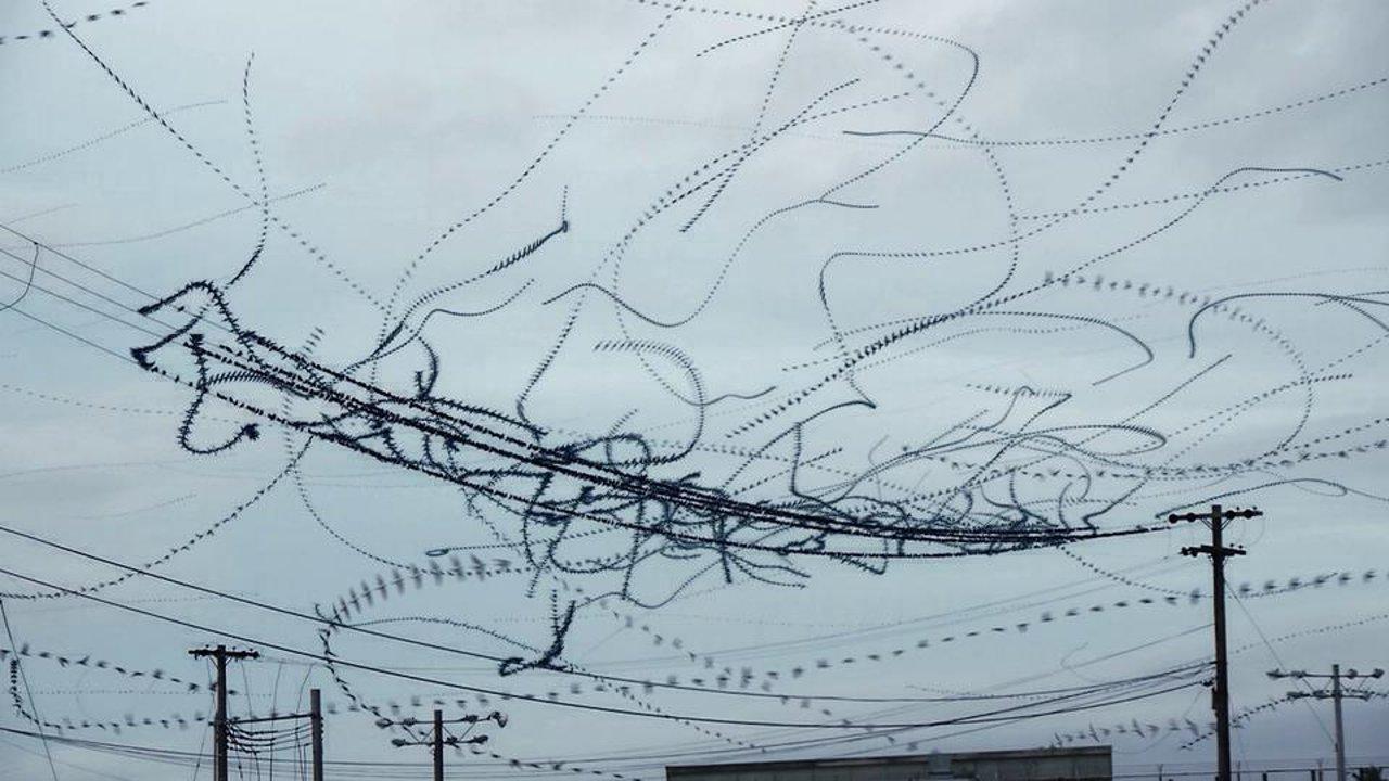 Визуалицаия траекторий полёта птиц