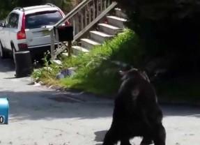 Край непуганых медведей