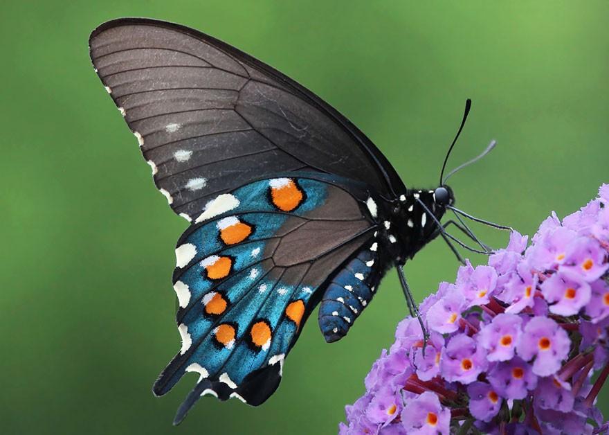 До и после: удивительные преображения в мире бабочек