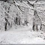В ближайшие 30-35 лет тёплых зим не ждите