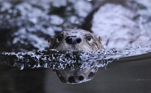 Инвазивные виды представляют угрозу биоразнообразию планеты