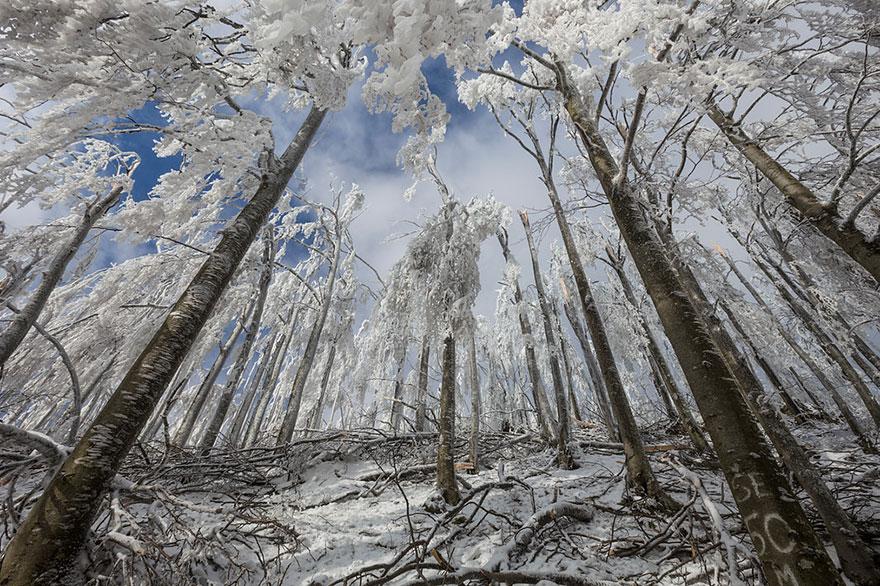 Деревья, покрытые льдом