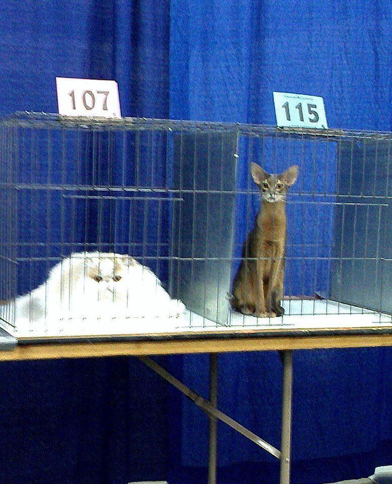 Cat diversity
