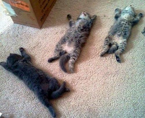 Tired kittens.