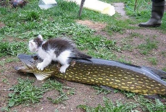 Кошка и рыбка