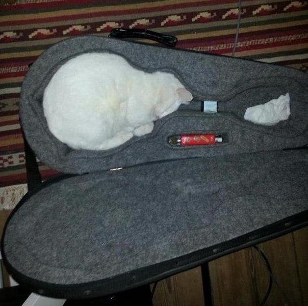 Чехол для кошек
