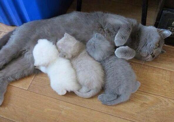 Кошки: закончились чернила