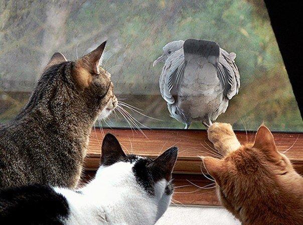 Дразнит кошек