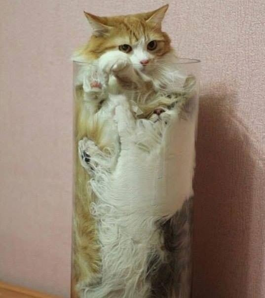 Cats are liquids!