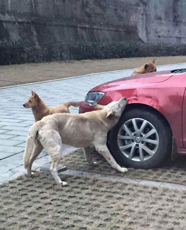 DogsVsCar