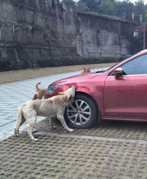 DogsVsCar2