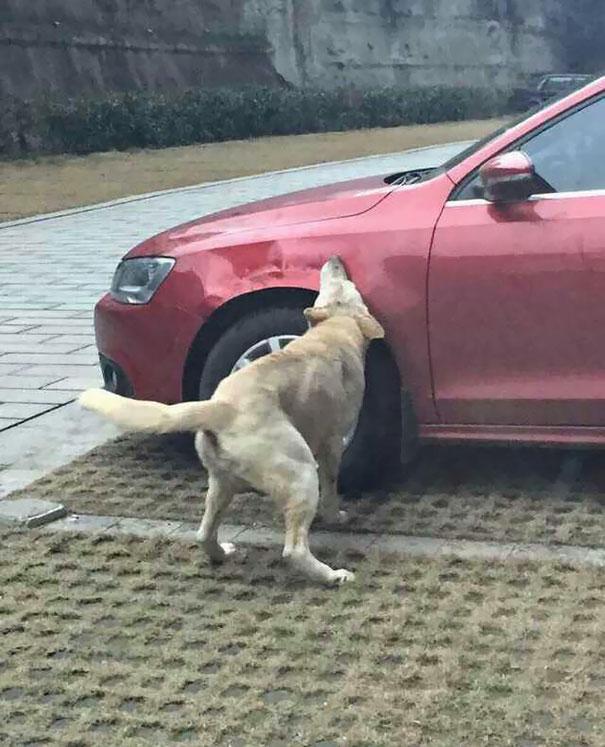 DogsVsCar4