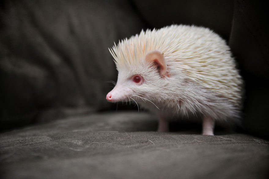albino11