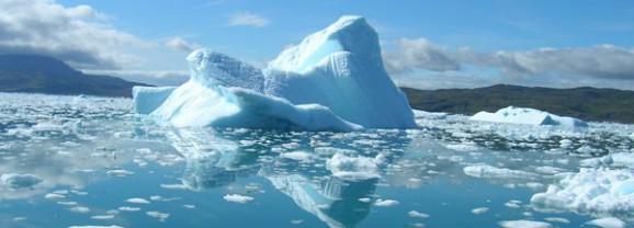 Глобальное потепление станет причиной гибели 97% всех животных Арктики