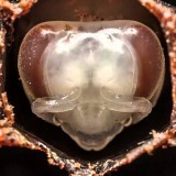 21 день жизни пчёл за 60 секунд