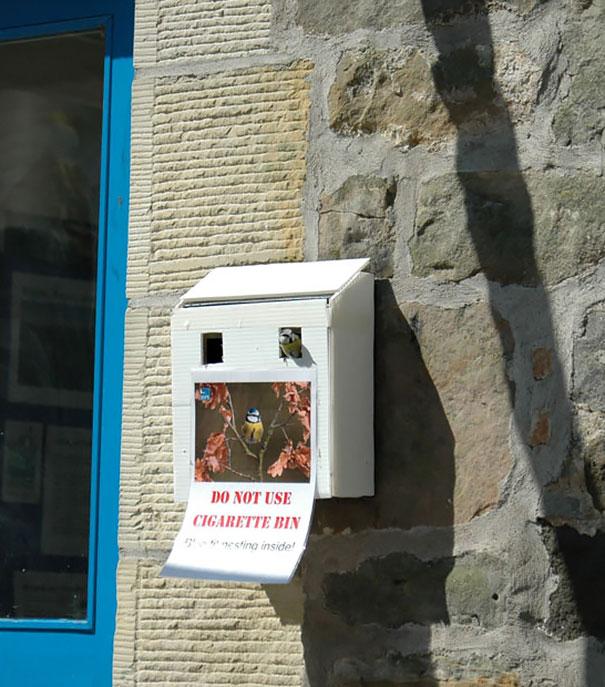 Гнездо в контейнере для окурков