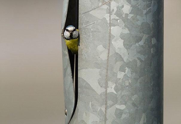 Гнездо синицы в фонарном столбе
