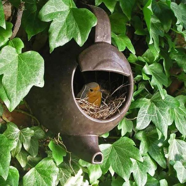 Гнездо в старом чайнике