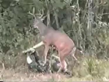 Олень против охотника