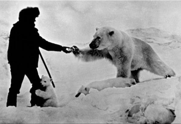 Кормление белого медведя