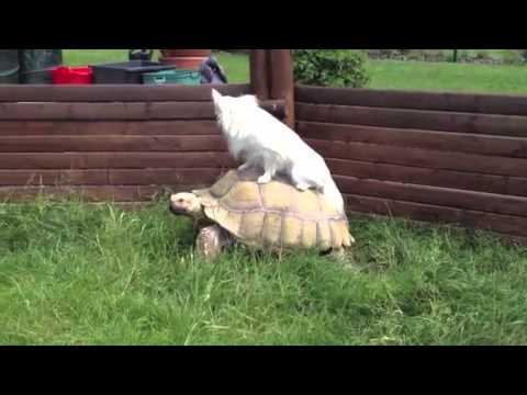 Собаки верхом на черепахах