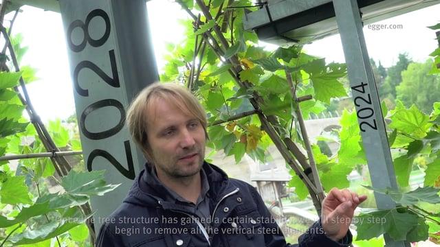 Botanic build: строительство зданий из живых деревьев