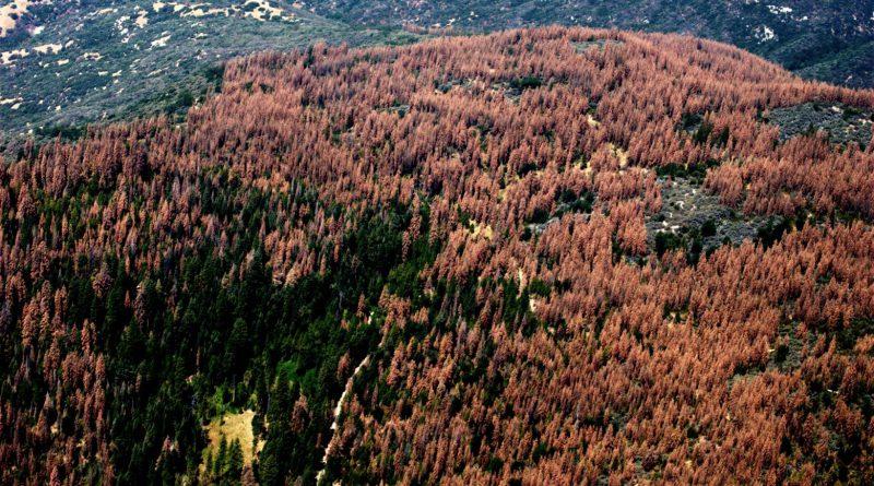 В Калифорнии за 6 лет не стало 1/3 всех лесов