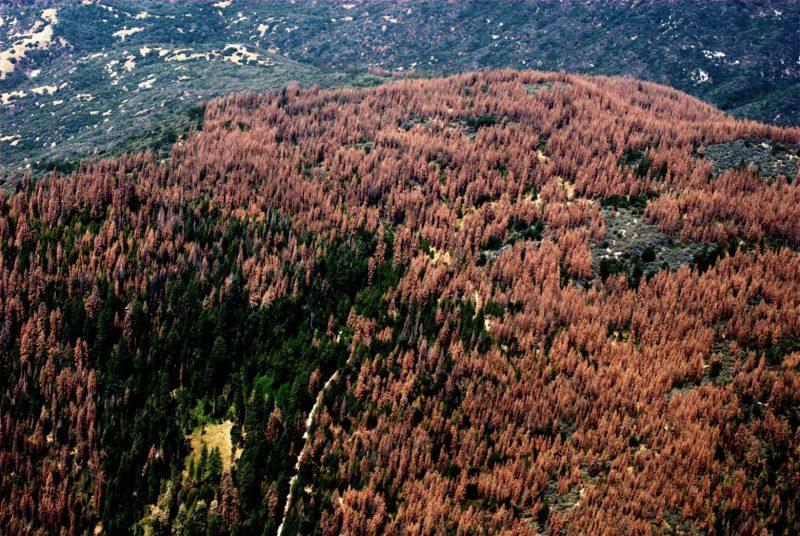 Высохшие леса Калифорнии