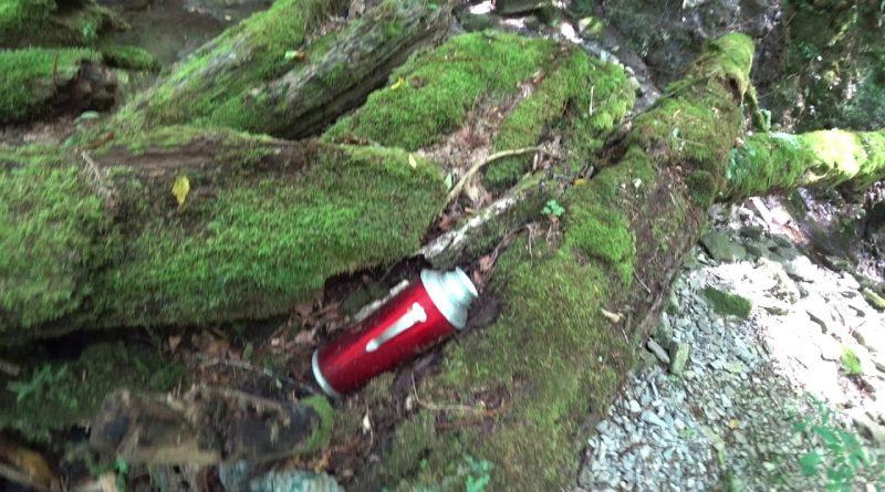 Прогулка по самшитовому лесу