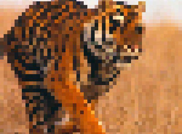 Исчезающее животные