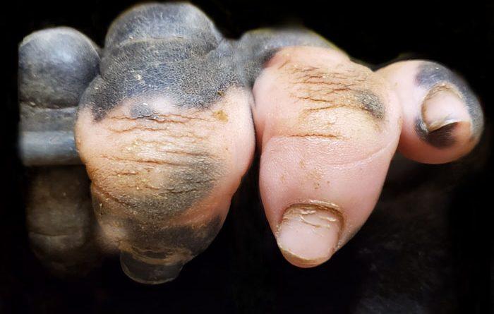 Пальцы гориллы без пегментации