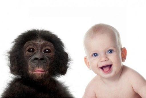 Человек и шимпанзе